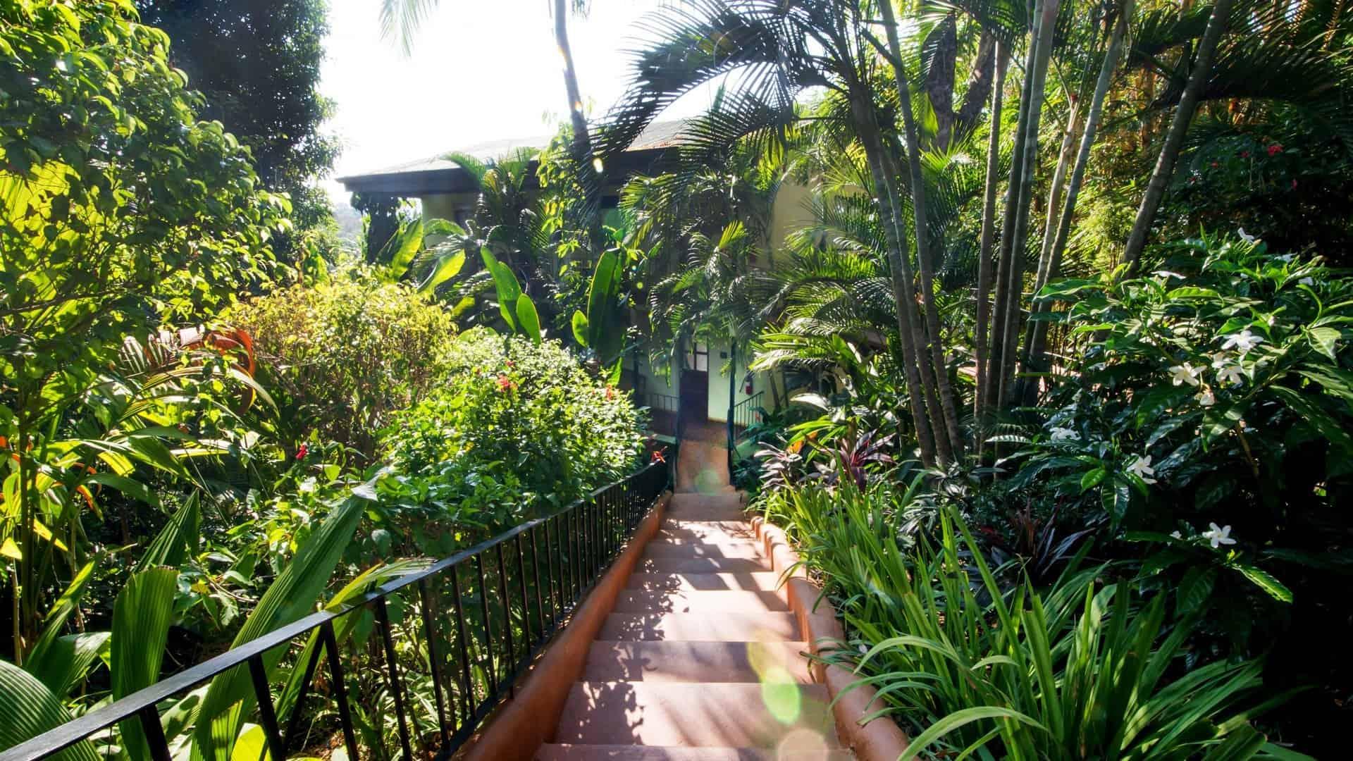 hotel-la-mariposa-manuel-antonio-costa-rica-standard-partial-ocean-view-liv
